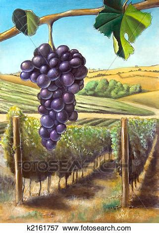 Stock Illustration of Grape and vineyard k2161757 - Search